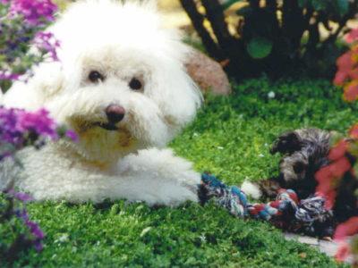 Daisy and Grover